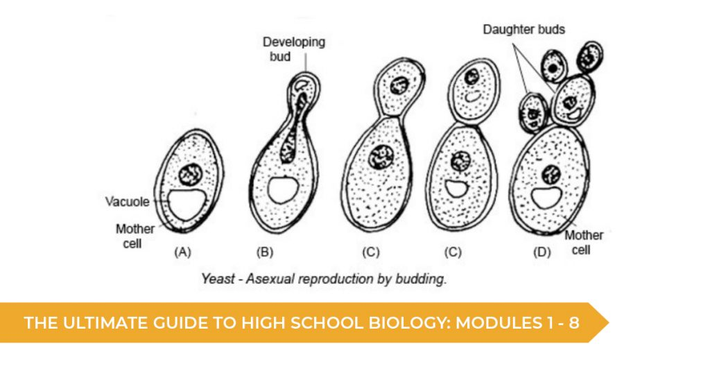 The Ultimate Guide To High School Biology: Modules 1 - 8