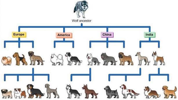Module 6: Genetic Change III
